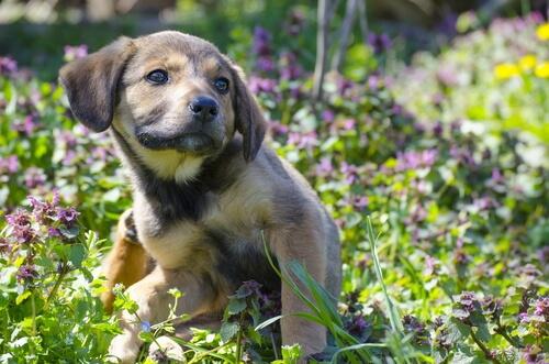 Qué son las pulgas en perros