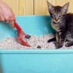 Qué tipos de arena para gatos existen
