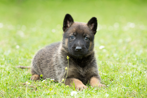 Remedios naturales para curar la cistitis en perros