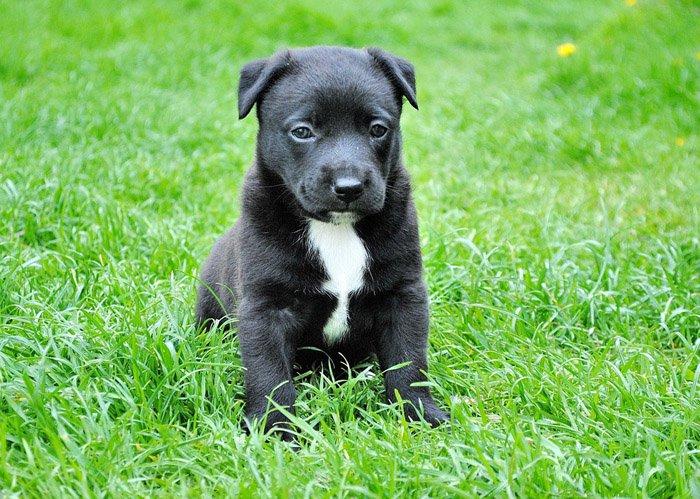 Síntomas de la meningitis en perros