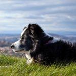 Se puede maltratar a un perro inconscientemente