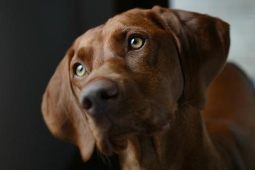 Si mi perro tiene legañas verdes