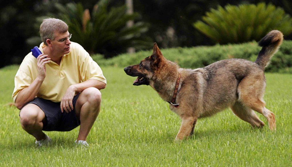Técnicas de adiestramiento canino basadas en el aprendizaje
