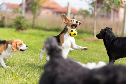 Técnicas de adiestramiento canino basadas en la etología