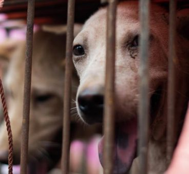 Taiwán prohíbe el maltrato animal y el consumo de perros y gatos