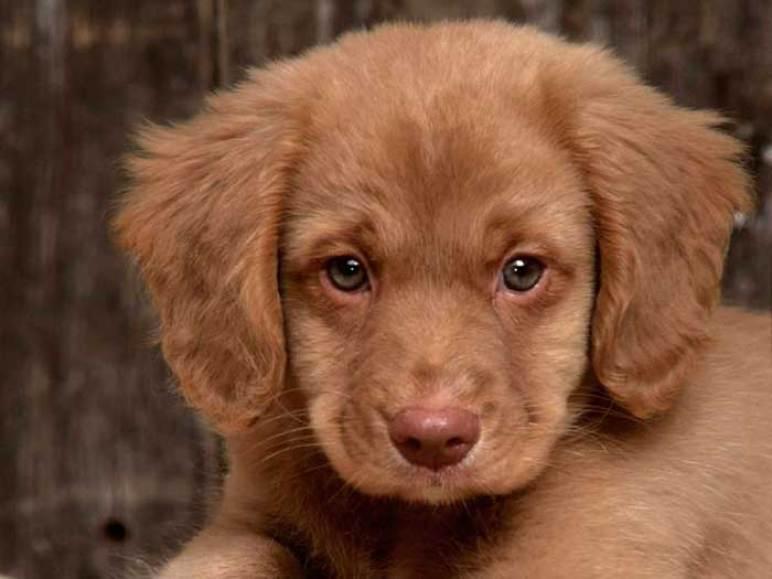 Tipos de seborrea en perros