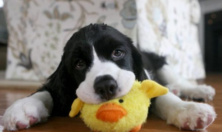 Todo sobre la leishmaniasis en perros