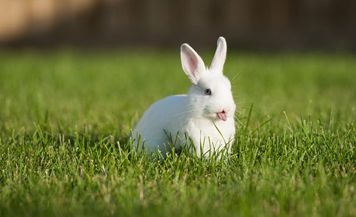 Tratamiento de la diarrea en conejos