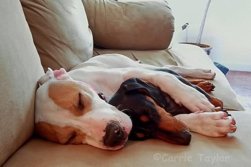 Tratamiento del síndrome de Wobbler en perros
