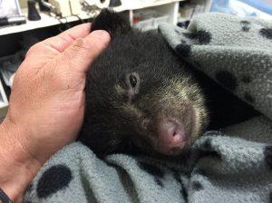 Un excursionista rescata a un pequeño oso de la muerte
