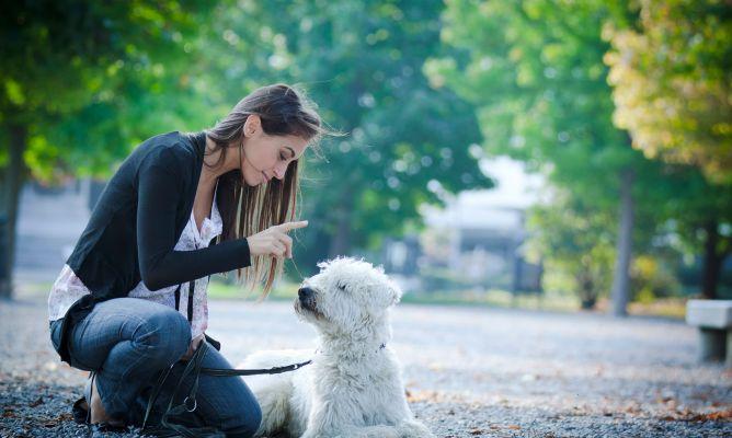 adiestramiento en positivo de tu mascota