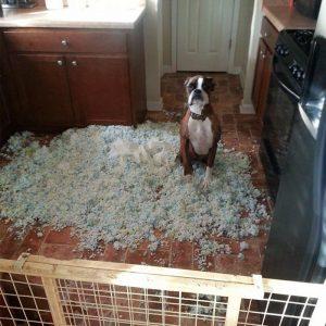 boxer desastre