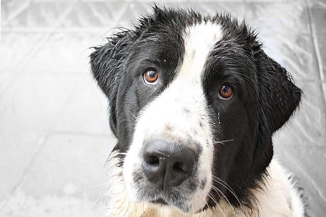 champú para perros sin jabón