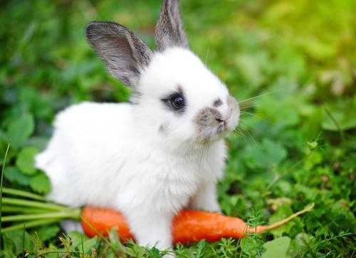 prevenir la diarrea en conejos