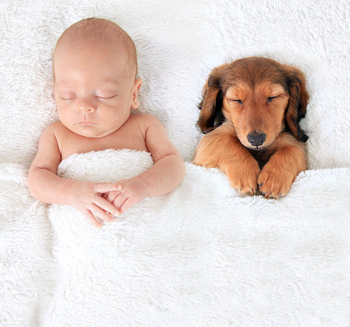 fotos que demuestran que los perros pueden ser mejores que la almohada