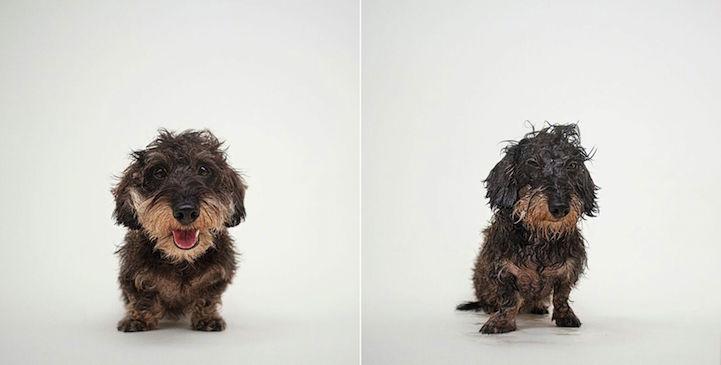 fotos de perros antes y después del baño