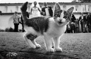 estropeando bodas