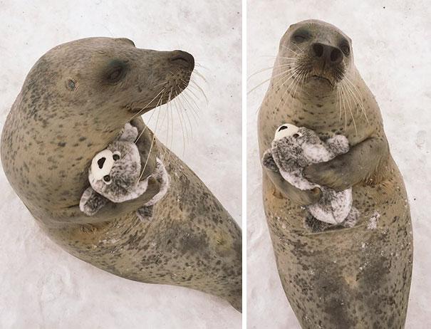 foca con peluche