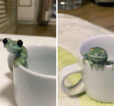 fotos más felices de animales