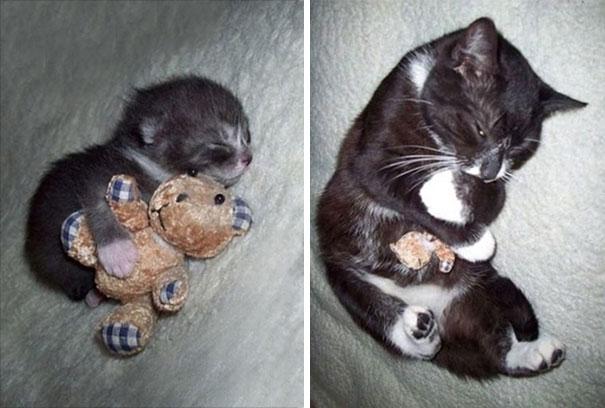 gatito abraza peluche