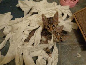 gatitos papel