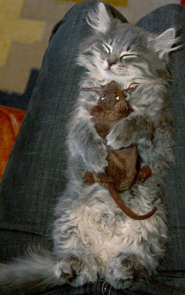 gato abraza raton de peluche