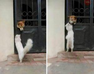 gato besa perro