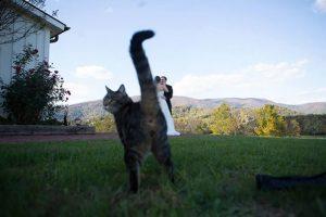 gato interrumpe boda