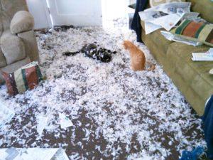 gatos almohada