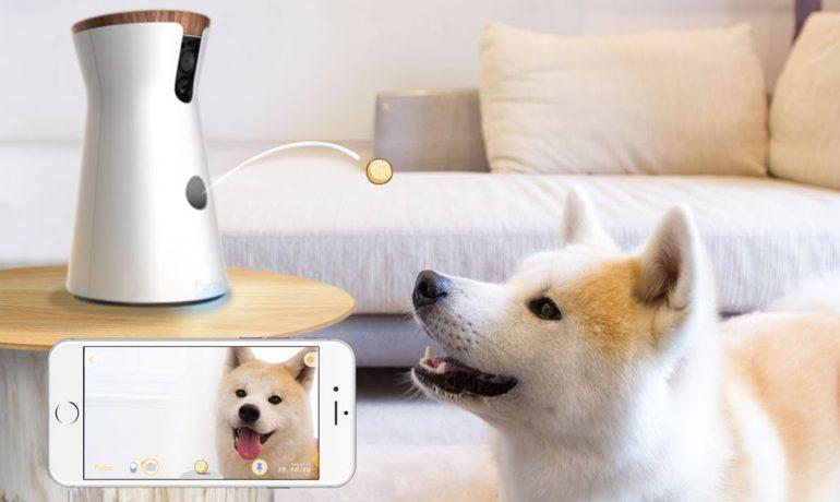 inventos para mascotas