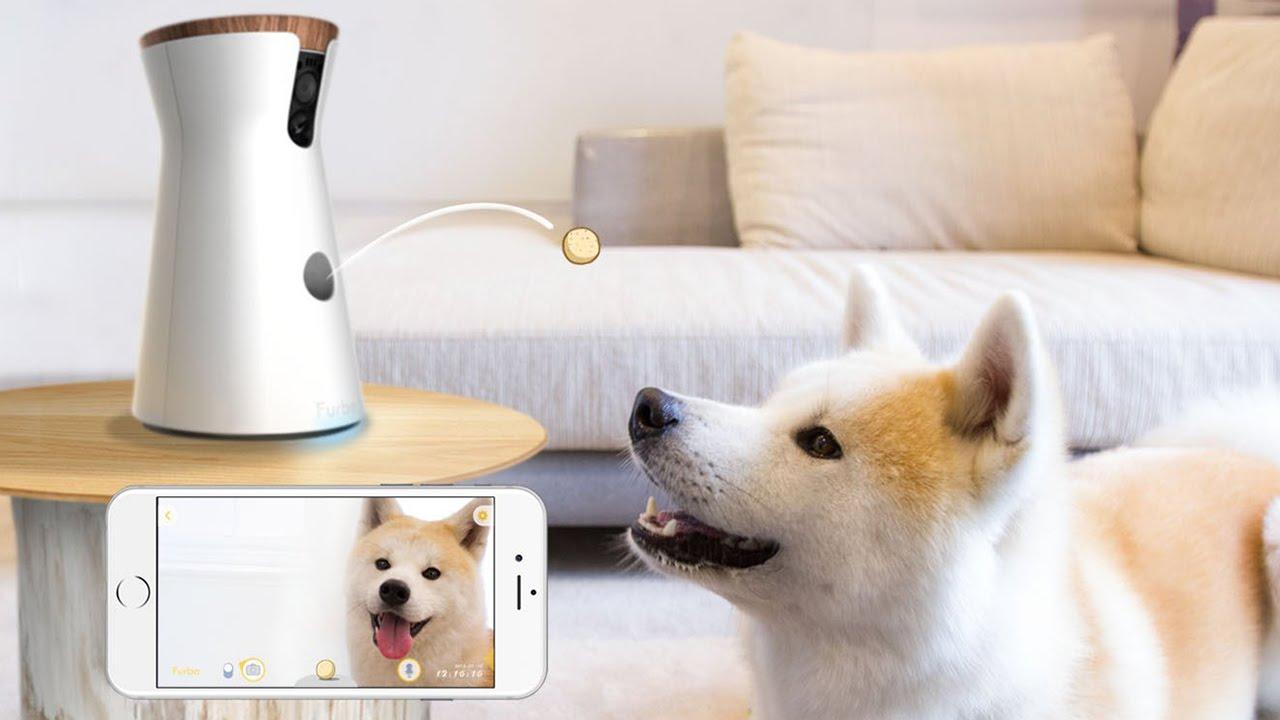 Mascotas Tecnol 243 Gicas Descubre Estos 8 Inventos Para Tu