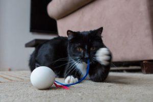 juguete gatos