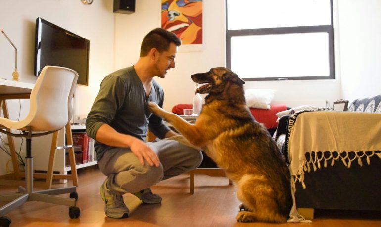 la satisfacción de adoptar un perro