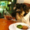 los mejores lugares Dog-Friendly de Madrid