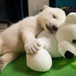 oso mascotas con sus peluches con peluche