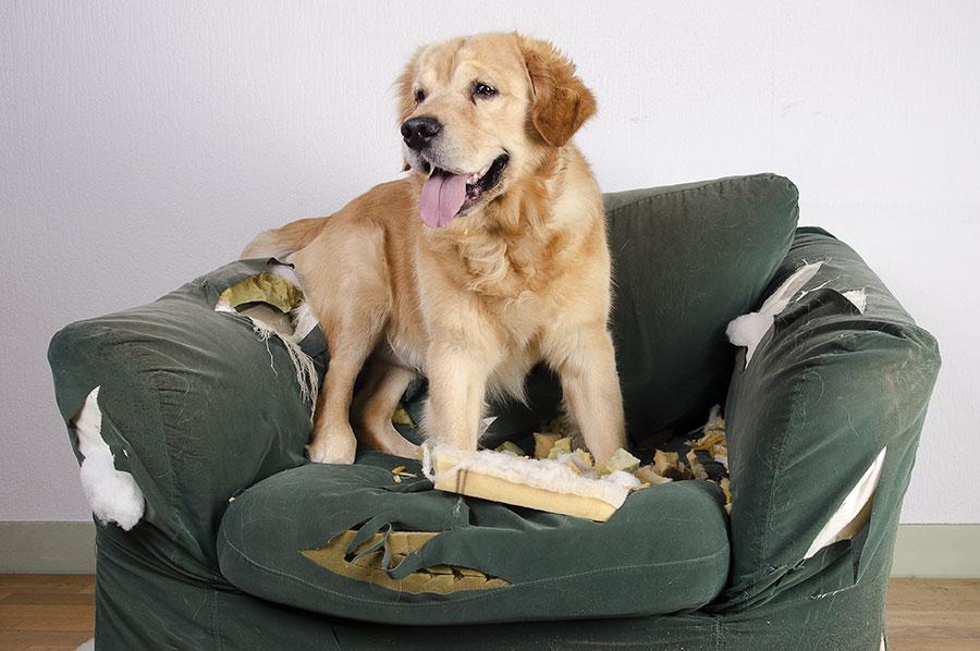 mi perro destroza su cama