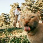 ocasiones en las que un gato estropeó una foto