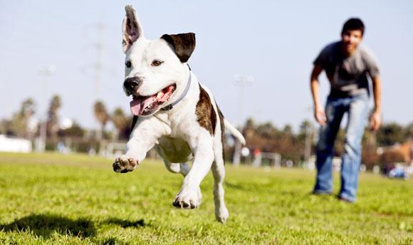 pasos para el adiestramiento en positivo de tu mascota