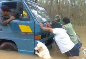perro ayudando a arrastrar coche