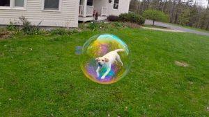 perro burbuja