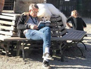 perro leyendo con humano