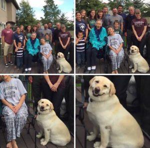 perro posando para foto