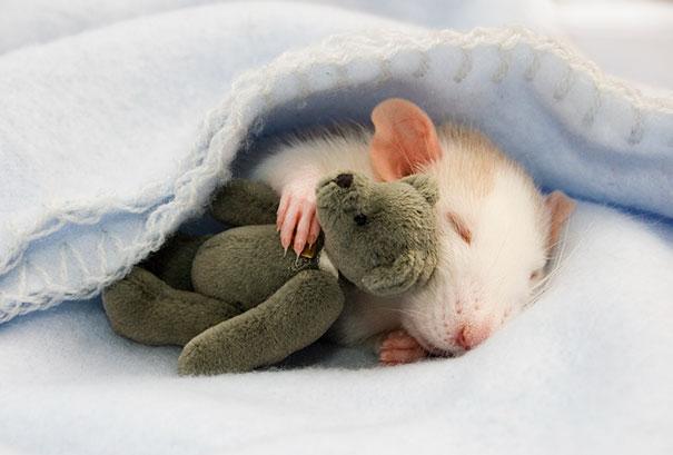 raton durmiendo con peluche