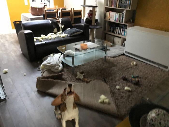 graciosos desastres tras dejar a un perro solo en casa