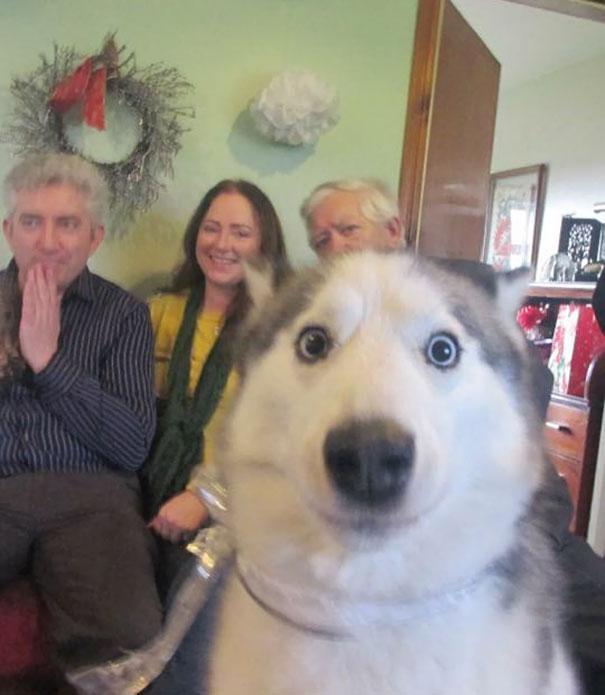 perros que consiguieron arruinar una foto