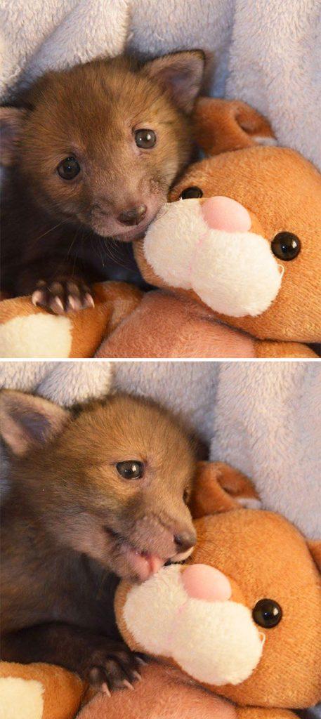 zorro bebe abraza peluche