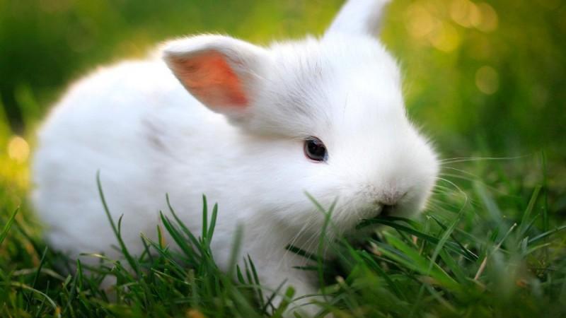 Alimentación del conejo anciano