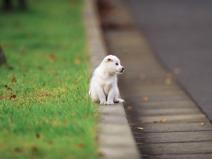 Apadrina a un perro abandonado