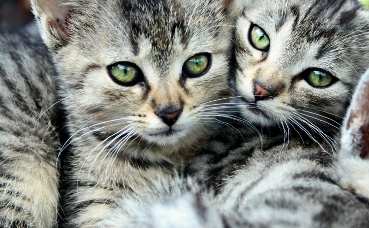 Aspectos clave para saber cómo se comportan los gatos