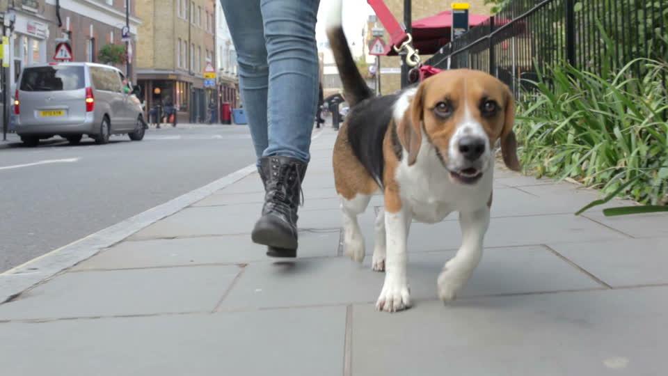 Beneficios que te aporta a ti pasear a tu perro